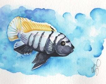 Black and Yellow Cichlid  | 4x6 Original Watercolor