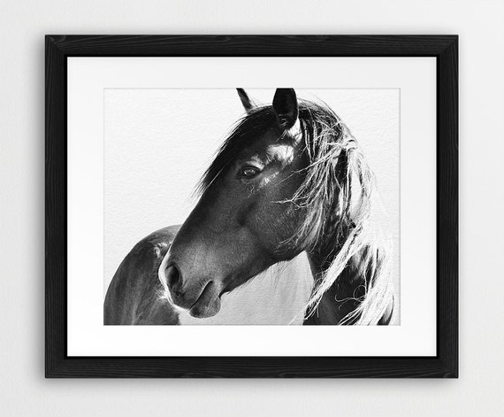 Horse Print Horse Photo Black And White Photography Wild