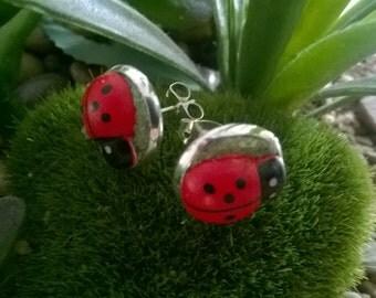 Lady bug /beetle silver earrings~ studs