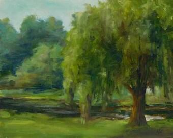 Weeping Willow OP16