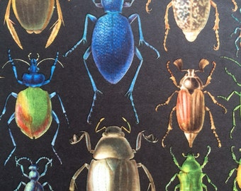 1968 Colourful Vintage Insect Print - Beetle - Ant - Entomology - matted and ready to frame - 14 x 11 inches