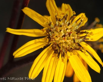 Yellow Flower Photo Flower Photography Nature Photography Digital Photo Download Home decor Wall decor Wall Art