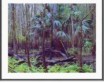 Tropical Forest Secret