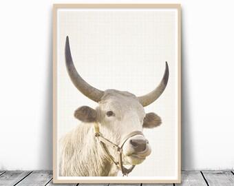 Bull Print, Animal Wall Art, Cow Photo, Cow Photography, Farm Animal Print, Farm Nursery Art, Nursery Cow, Cow Printable Art, Digital Print