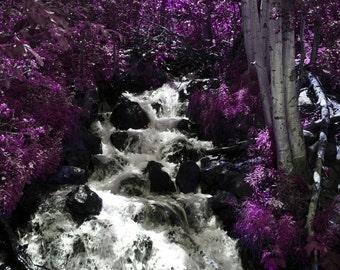 Violet Falls 8x10 Glossy print