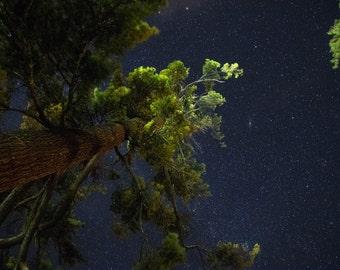 Upward through the trees, nature, tree photo, forest photo, fine art nature, trees, stars, Milky Way