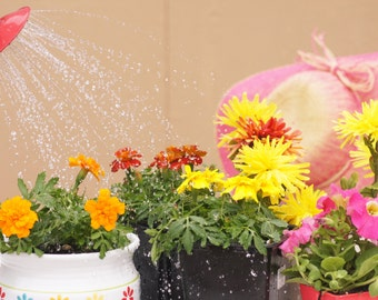 Canvas Wraps/ Garden Flowers/ Flower Photography