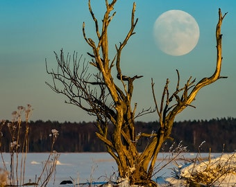 Super moonrise over forest