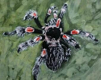Brachypelma smithi - Mexican redknee tarantula - Original
