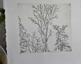 Winter trees etching, trees with bare branches and snow intaglio print, trees in winter print, bare trees print, branches against sky print