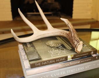 Whitetail Deer Antler