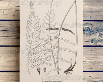 Digital artwork, Fern, Antique vintage print, Large prints, Art print download, Botanical fern print, Wall art, Prints and posters, JPG PNG
