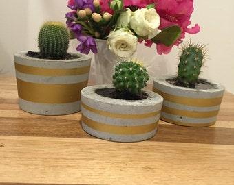 Concrete Cactus Planter