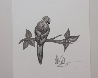 India ink parrot on branch illustration
