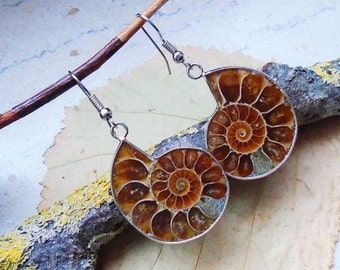Ammonite fossil, earrings, earrings, 925 sterling silver hook