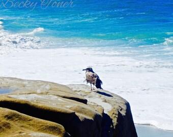 Seagull on the Rocks at Windansea