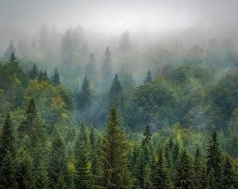 Misty Forest - Forest - Forest Photo - Forest Landscape - Green - Digital Photo - Digital Download - Instant Download - Living Room Decor