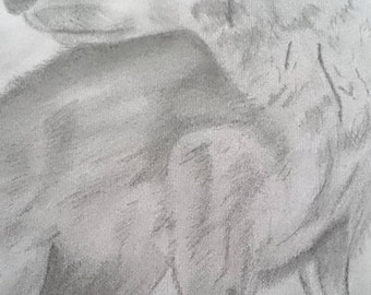 Wolf Pencil Drawing A4