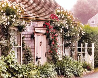 Nantucket Beach Cottage, New England Coast, Nantucket Island, Roses, Weathered Grey Shingles, White Picket Fences, Wall Decor