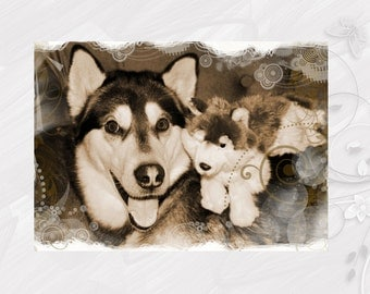"Post card greeting card ""Alaskan Malamute"" dog - [# GK. 2012.016]"