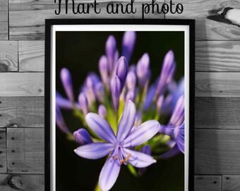 Flower photography, art nature, macro photography, purple flowers, instant download, printable art, home decor,