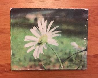Daisy Photo Canvas Transfer