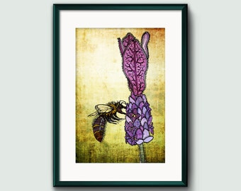 Bee On Lavender - A3 High Quality Print