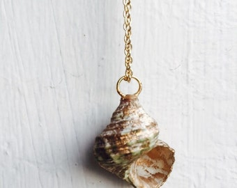 Real Sea Shell Necklace with Gold Accent