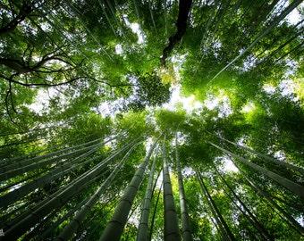 """Photography """"Sagano bamboo"""" Format A4 20x30cms - Kyoto, Japan"""