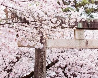 "Photography ""Himeji Jinja"" Format A4 20x30cms - Himeji, Japan"