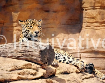 Jaguar Gallery-Wrapped Canvas Print! Add some jazz to your living room!
