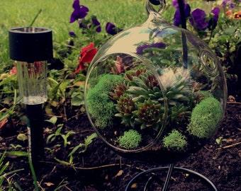 Terrarium / Airplant glass globe