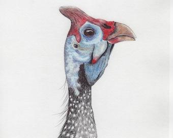 Guinea Fowl Ballpoint Print