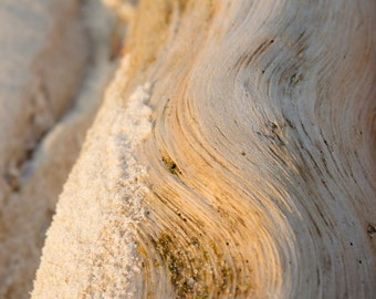 Smooth Driftwood