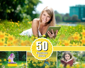 50 Narcissus flower, Daffodils Photo Overlays, Photoshop Overlays, Photoshop overlay, Foreground Elements, digital overlays, png file