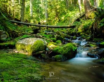 Parker Creek | Oregon Landscape Photography | Print