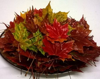 50 Dried Autumn Leaves, Preserved in Wax