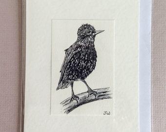 Darling Starling Greetings Card
