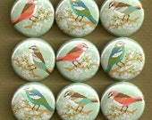 One Inch Magnet Set - Colorful Birds