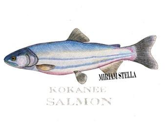 Salmon drawing - unframed