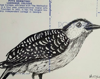 Woodpecker- Original drawing on vintage post card by Mr Hooper of Nashville Tennessee