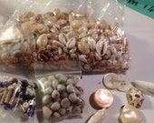 Shell bead lot