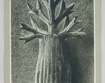 1932 Original Photogravure Print from Karl Blossfeldt Wundergarten Der Natur Second Series  Plate #107 Authentic Book Plate