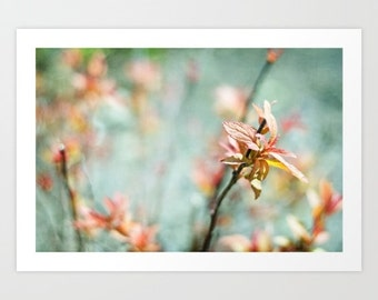 nature photo- bright- colorful -light blue -peach- pink- Color Bloom fine art photograph- flower photo wall art- home decor