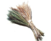 Dyed Grass Accent for Pine Needle Basket Bundle or Fringe Natural Material Green Tan Coiled Basketry Supply Bushy Bluestem Grass Plumes