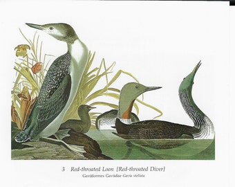 Audubon Red Throated Loon or Red Necked Grebe for Framing, Collage, Altered Art, Paper Arts and MORE PSS 2760