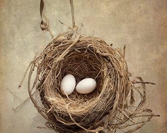Bird Nest Photograph, Eggs, Nest, Baby Birds, Nature Art, Shabby Chic, Rustic Print, Nursery Wall Art, Beige, Brown - The White Dove's Eggs