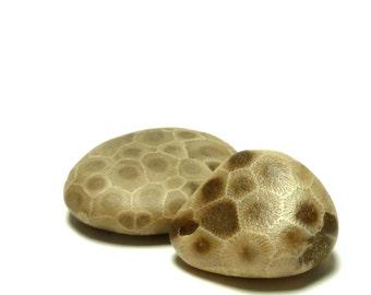 PURE MICHIGAN Large Petoskey Fossil Beach Stone Pebble Jewelry Bead Native Michigan Coral Powerful Odawa Indian Rock