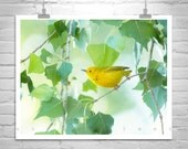 Yellow Bird Photograph, Warbler Bird Art, Yellow Bird Picture, Forest Bird Art, Cottonwood Tree Leaf Art, Bird Lover Gift, Birder Gift