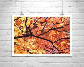 Autumn Art, Fall Leaves, Nature Photography, Fine Art Photography, Fall Picture, Catalina Mountains, Tucson, Murray Bolesta, Maple Leaf